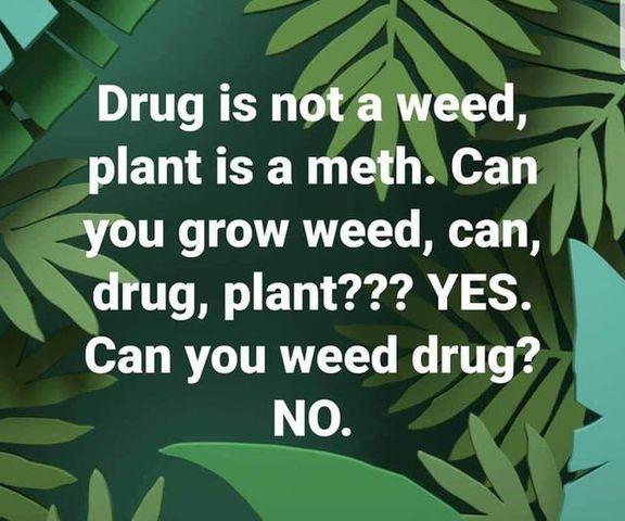 weed34.jpg