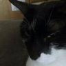 @_discordpuppet__188415501607632896:blob.cat