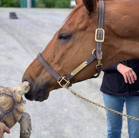 horse_turtle.jpg