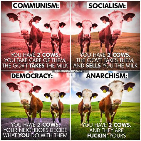 State - Anarchy and cows.jpg