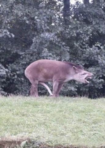 tapirdong.c.png
