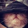 @mister_/:matrix.org