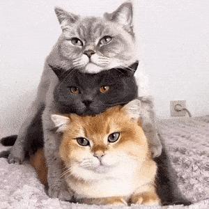 Katze_hoch3.gif