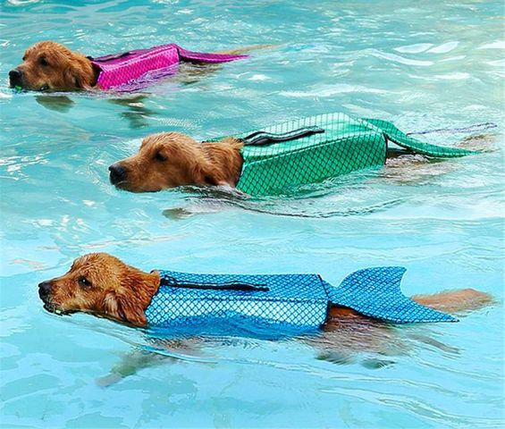 mermaid-dog-life-jacket.jpg