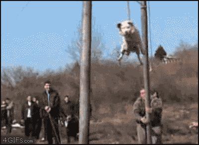 spinning doggo 1.gif