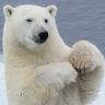 @dngray:polarbear.army