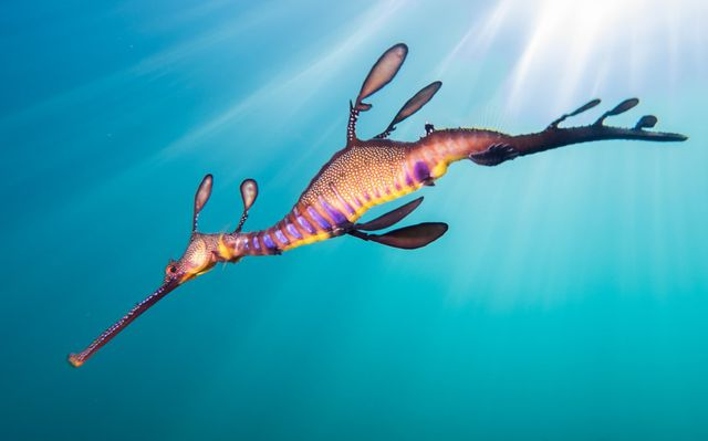 Seadragon-Sunlight.jpg